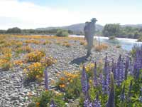 Vippers bugloss, Californian poppies and a fishing guide!