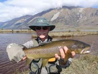 A pretty spotted brown trout