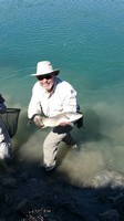 Fly fishing trout in beautiful New Zealand